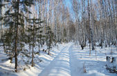 Dirt road in a snowy winter forest — Stock Photo