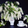 Bunch of blossoming bird cherry in a vase on black background — Stock Photo
