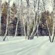 Beautiful glade in a winter birch forest — Stock Photo