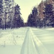Snowy road for snowmobiles in a winter pine forest — Stock Photo #39557023