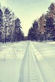 Snowy road for snowmobiles in a winter pine forest — Zdjęcie stockowe