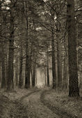 Retro stylized photograph of dirt road in a pine wood — Stock Photo