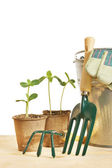 Gardening still life with young plants in pots isolated over white — Stock Photo