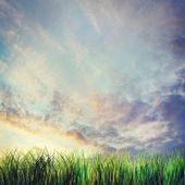 Dramatic summer landscape with sunset cloudy sky and grass — Stock Photo
