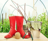Garden tools with seedlings and rubber boots in the hothouse — Stock Photo