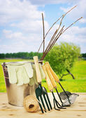 Garden composition with seedlings and tools outdoor — Stock Photo