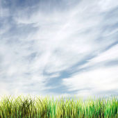 Beautiful summer background with sky and green grass — Stock Photo