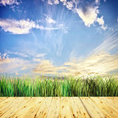 Beautiful summer background in sunny day — Stock Photo