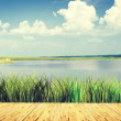 Beautiful summer landscape at a lake — Stock Photo #45701795