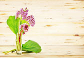 Small bouquet of Bergenia flowers against wooden background — Stockfoto