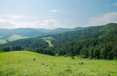 Beautiful summer alpine landscape with green wooded mountains — Stock Photo