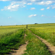 Stock Photo: Road leading through grain.