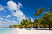 Palm trees on the tropical beach, Caribbean Sea, Dominican Republic — Stock Photo