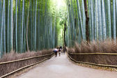 Bamboo Forest, Kyoto, Japan — Stock Photo