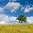 Beautiful summer landscape with a lonely tree  — Stock Photo