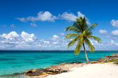 Palm tree on the tropical beach, Saona Island, Caribbean Sea — Stock Photo