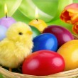 Colorful Easter arrangement — Stock Photo