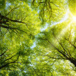 Sun shining through treetops - Stock Photo