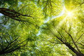 Sun shining through treetops — Foto de Stock