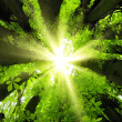 Sun shining through treetops — Stock Photo #20729211