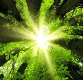 Sun shining through treetops — Stock Photo