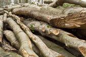 Pile of lumber — Stock Photo