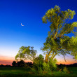 Illuminated old tree at nightfall — Stock Photo