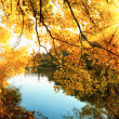 The golden sun of autumn — Stock Photo