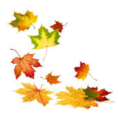 Beautiful autumn leaves falling down — Stock Photo
