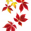 Delicate arrangement of autumn leaves — Stock Photo