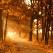 Golden autumn lightbeams on a footpath — Stock Photo