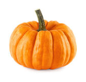 Neat pumpkin on white — Stock Photo