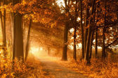 Golden autumn lightbeams on a footpath — Foto Stock