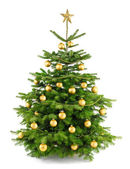 Lush christmas tree with gold ornaments — Stock Photo