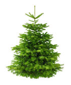 Perfect lush Christmas tree without ornaments — Stock Photo