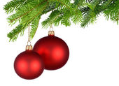 Red Christmas baubles hanging from fresh green twigs — Stock Photo