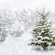 Fir tree in thick snow — Stock Photo #35941497