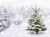 Fir tree in dik sneeuw — Stockfoto