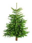 Natural little Christmas tree without ornaments — Stock Photo