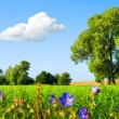 Idyllic meadow at nice weather — Stock Photo