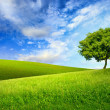 Single tree on top of a green hill — Stock Photo