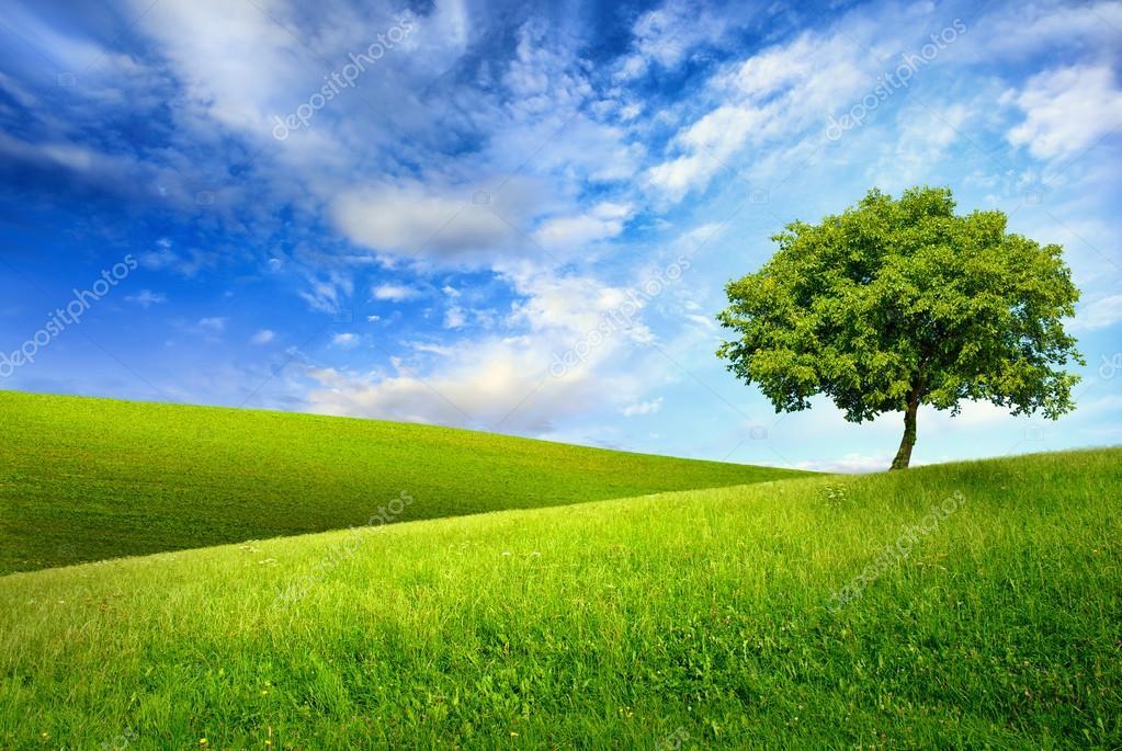 Singolo albero sulla cima di una collina verde foto for Piani di serra in collina
