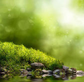 Green nature background — Stock Photo