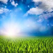Sunlit grassland — Stock Photo