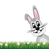 Bunny szary wygląd strony stokrotka łąka na białym tle — Wektor stockowy