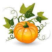 Pumpkin with leaves — Stock Vector