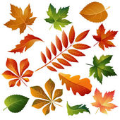 Collection beautiful colorful autumn leaves — Stock Vector