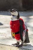 Pingüino — Foto de Stock
