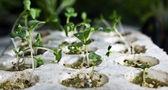 Plants grown using hydroponics. — Stock Photo
