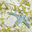 Royalty-Free Stock Photo: Starfish